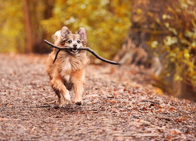 So schön kann Herbsturlaub mit Hund im Schwarzwald sein