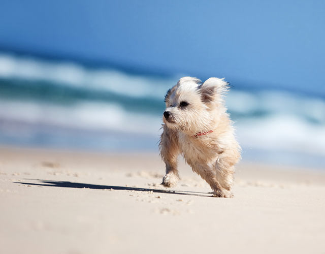 Hund am Ostseestrand