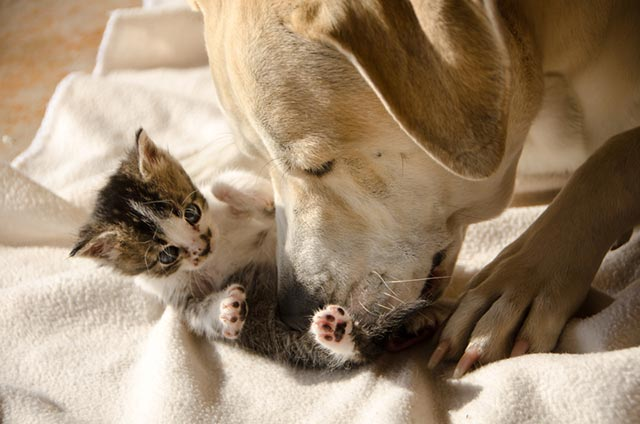 Hund und Kätzchen © Donna Kilday | Dreamstime.com