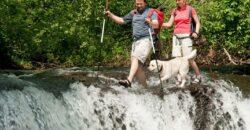 Wandern mit Labrador