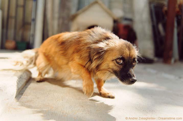 Ängstlicher, misstrauischer Hund