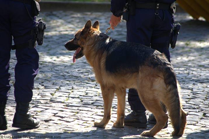 Polizehund Sam - traurige Geschichte