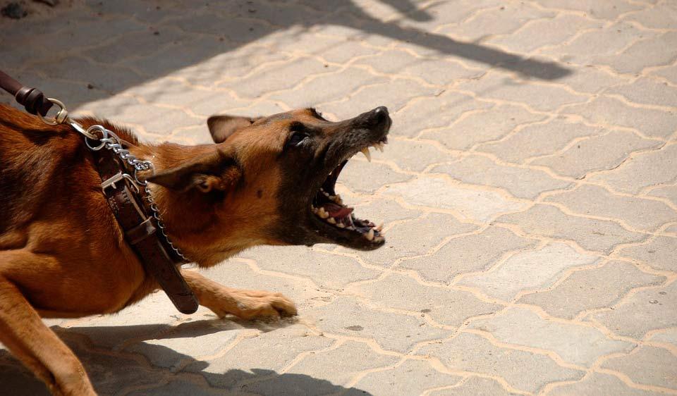 Das ist zwar nicht Elvis, aber ein Hund mit ähnlichem Verhalten. Er meint es ernst...
