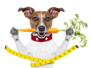 Gesunde Karotten für Hunde
