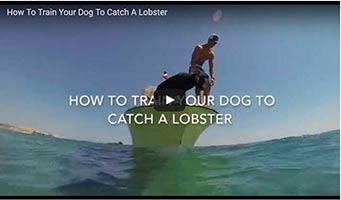 Hund fängt Hummer: Tauchen für Hunde