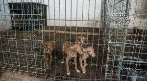 Hundehandel und Welpenhandel sind likrativ aber schlecht für die Tiere