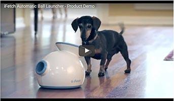iFetch Ballwurfmaschine für Hunde