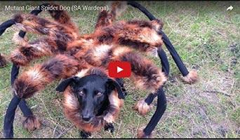 Riesenspinnen-Hund: Scherz oder cooler Gag?
