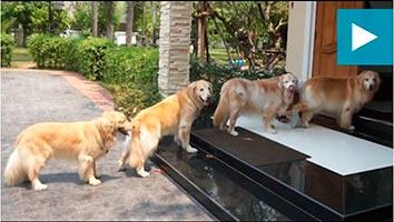 Von solcher Erziehung ihres Vierbeiners träumen die meisten Hundebesitzer