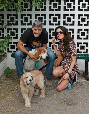 Clooneys haben ein Herz für Rescue-Dogs