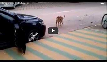 Hund mit Musik im Blut
