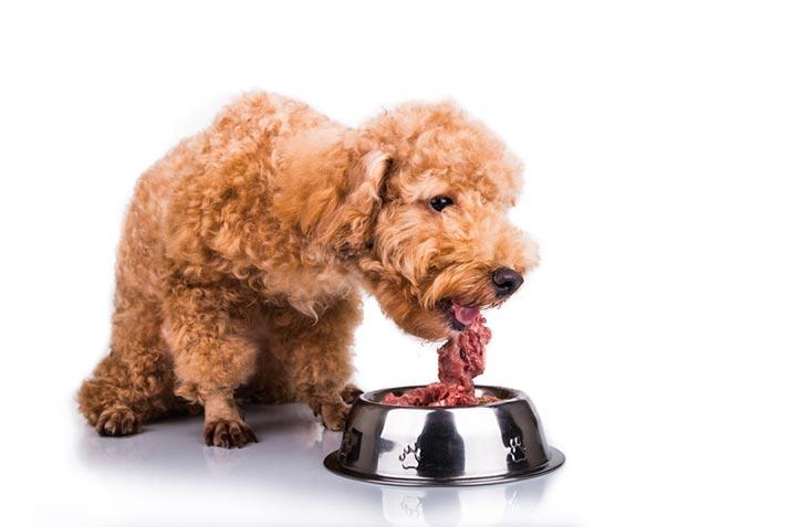 Fleischallergie bei Hunden