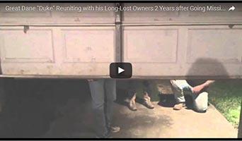 Vermisste Dogge nach zwei Jahren wieder aufgetaucht