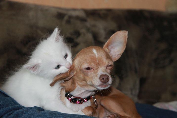Wer macht glücklicher: Hund oder Katze?