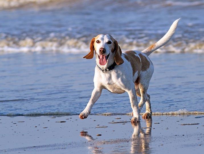 Urlaub mit Hund in Südholland