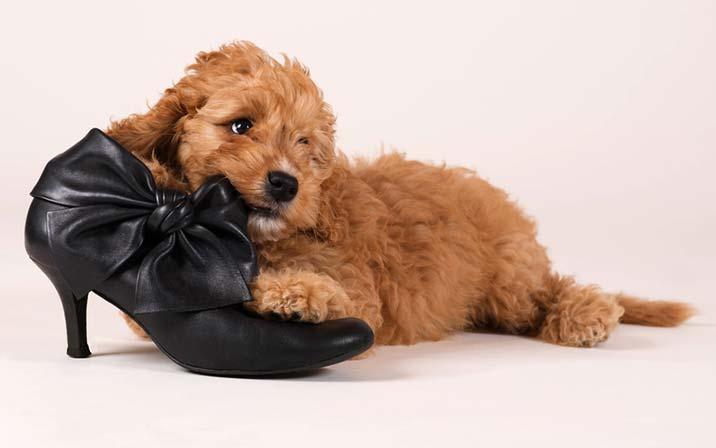 Zerstörungswut beim Hund sollte man rechtzeitig aberziehen