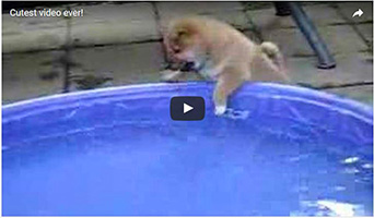 gefahrenzone-swimmingpool-hund