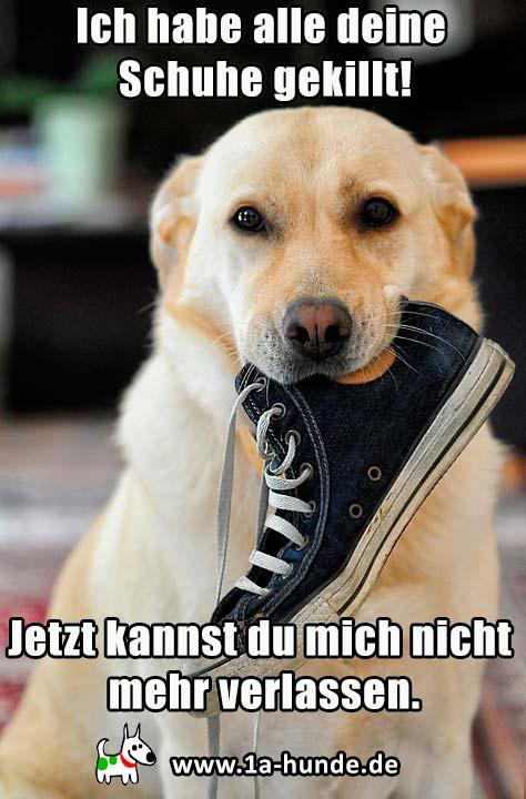 Zerstörungswut beim Hund