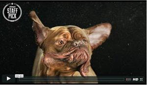 SHAKE: Selbst aus sabbernden, schüttelnden Hunden etwas Interessantes zaubern