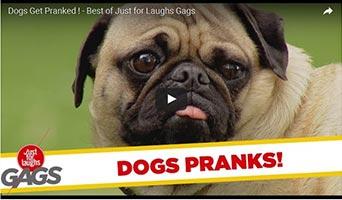 Hunde spielen neckische Streiche