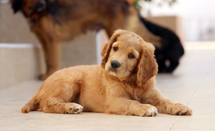 Hunde neigen Kopf, wenn man sie anspricht?