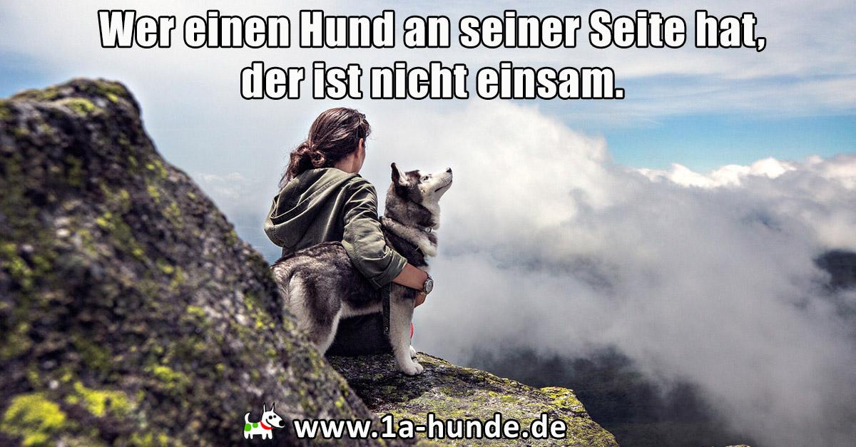 Wer einen Hund an seiner Seite hat, der ist nicht einsam.