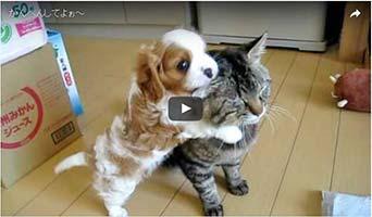 Hundewelpe kaut Katzenohr