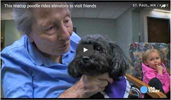 Therapiehund Nala im Pflegeheim
