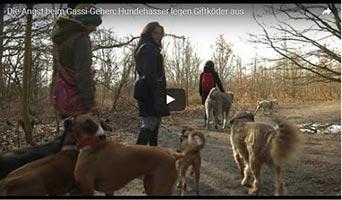 Giftköder- Gefahr für Hunde