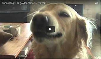 Golden Retriever Gracie zaubert ein Lächeln ins Gesicht
