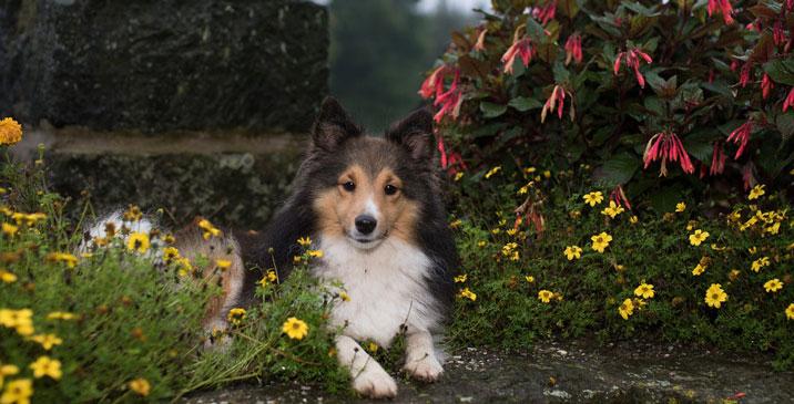 Hund vor der Hitze schützen