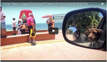 Mann mit krebskrankem Hund auf großer Reise