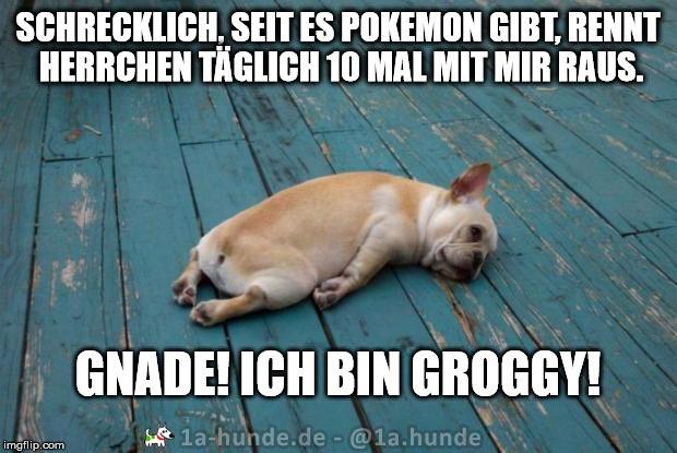 Pokemon beschäftigt Hundehalter