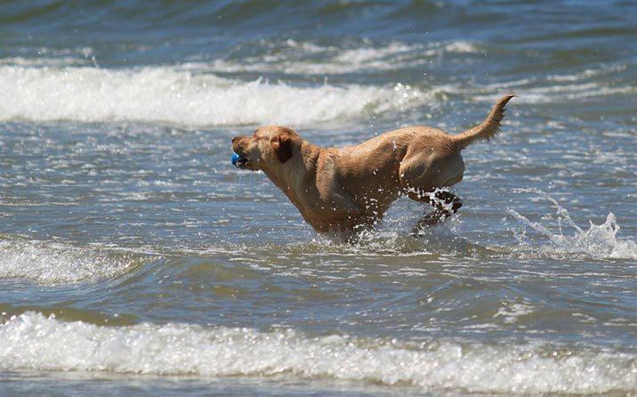 Ideen für Urlaub mit Hund in Frankreich