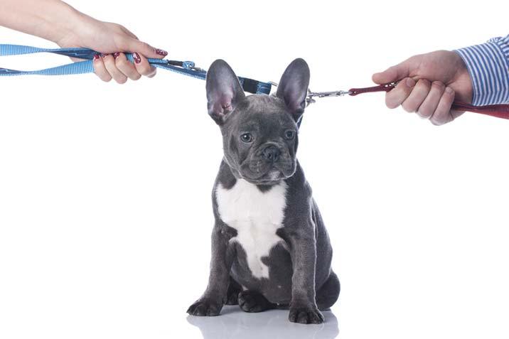Wer bekommt den Hund bei Scheidung?