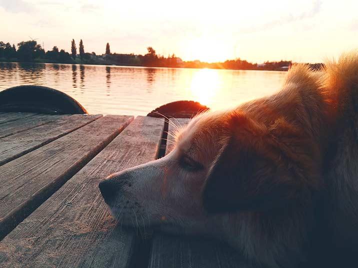 Urlaub mit Hund in Polen am Wasser