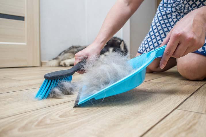 Hundewolle - zu schade für die Tonne