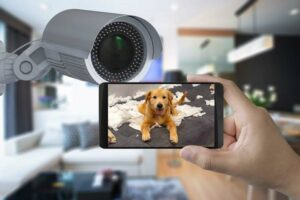 Hundekamera in Aktion