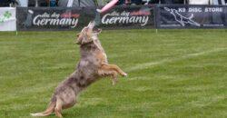 Hundefrisbee Wettkampf