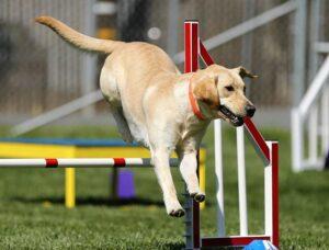 Hundesport Übersicht - Hundesportarten von a bis z