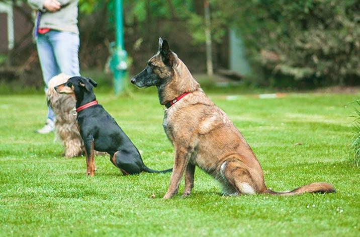 Hundetraining - Mondioring