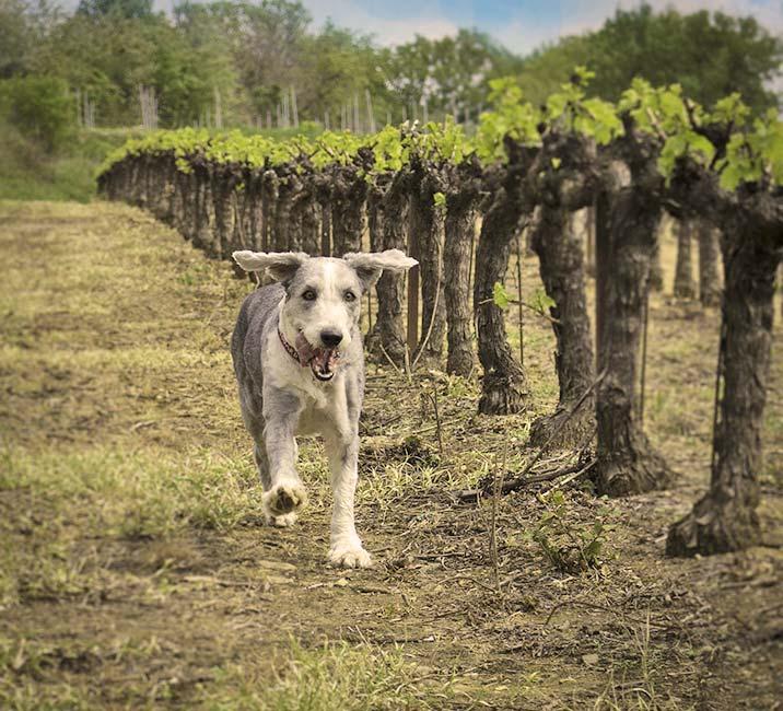 Urlaub mit Hund in der Toskana - Ausflugsziele