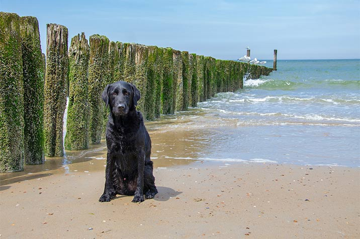 Badeurlaub mit Hund in Dänemark