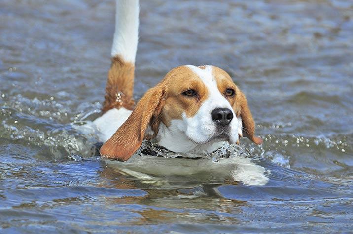 Urlaub mit Hund am Gardasee
