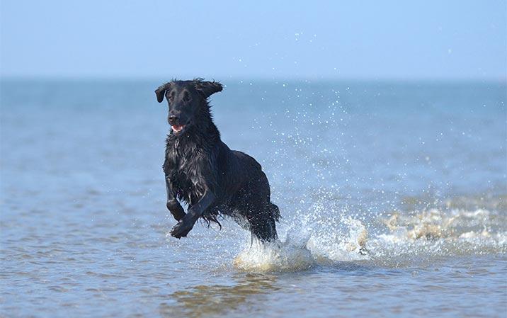 Badeurlaub mit Hund an der Ostsee