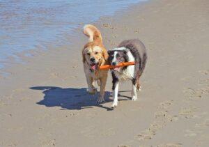 Hundeurlaub in Rimini