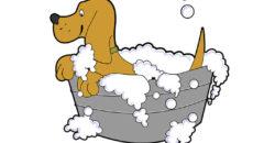 Hundepflege-Zubehör - Tipps